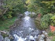 近隣の清流「五百川」の、木々が色づき始めた頃です。秋の彩りには、華やかな春とは違った趣きがあります。