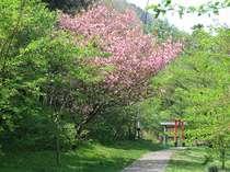 近隣の遊歩道「ケヤキの森」の、春の頃です。散歩をしていて一番楽しい頃です。