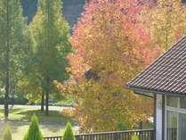 お部屋から 秋 秋秋