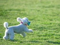 【ペットと一緒】愛犬と楽しいひと時を