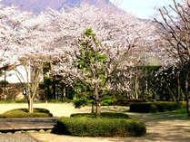 【春満開♪ふくしま春旅】福島名物お土産&選べるアクティビティ体験に使える割引チケット付プラン