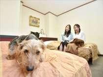 ツインベッドルームでペットと仲良くお泊り♪