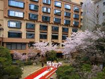 桜満開のなかで結婚式