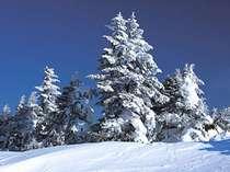 【リフト券&温泉券&レンタル割引】スキー場まで0分☆白銀を満喫!