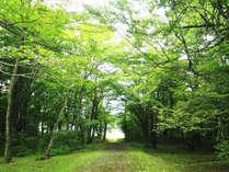 自然に囲まれた会津高原♪キラキラの緑に癒されます。
