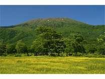 笹ヶ峰キンポウゲ