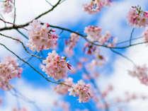 ★春爛漫♪お花見プラン★お出かけのお共にドリンクサービス付き♪