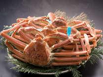 """石川県のブランド蟹""""加能ガニ"""" ※イメージです。"""