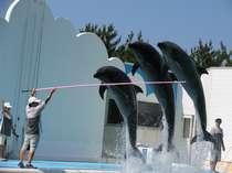 ◆ 水族館マリンピア日本海入場券付プラン ◆