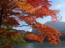 志賀高原の紅葉は10月上旬~10月中旬まで