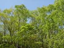 志賀高原の新緑は6月です