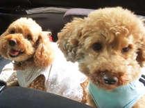 *【ワンちゃん】旅行先でも愛犬とご一緒に!