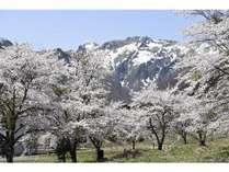 徒歩1分の桜並木 お散歩におすすめです。周辺に天一美術館もございますのでついでにどうぞ♪