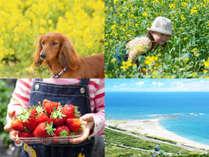 温暖な南房総は綺麗な花々が咲き誇り、イチゴ狩りスポットもたくさんあります。そして目の前には太平洋♪