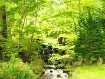 豊かな緑に包まれる久万高原の夏