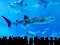 【早割28】★ちゅら海水族館チケット付き★幻想的な海を味わいましょう♪【素泊まり】