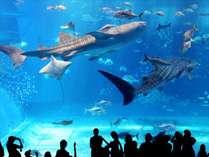 【早割45】★ちゅら海水族館チケット付き★幻想的な海を味わいましょう♪【朝食付】