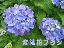 ★【6月限定】紫陽花プラン【室数限定】