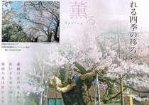 盛岡地方裁判所前石割桜