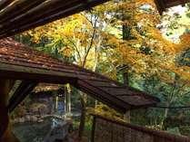秋は紅葉に包まれます…※例年11月頃から