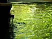 【わたり湯】新緑と湯口。