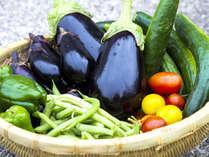 【収穫体験 3食付】ホテル自家栽培野菜の収穫体験付!旬菜プラン