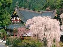 【しだれ桜10選】身延山のしだれ桜プラン