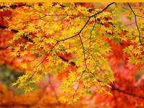 【秋★紅葉】身延山の紅葉と味覚を楽しむ旅★郷土料理1泊2食付きプラン