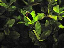 ■季節限定 ホタル観賞ツアー■初夏の風物詩を観よう!グレードUP部屋!ホテル最上階で創作和食ディナー