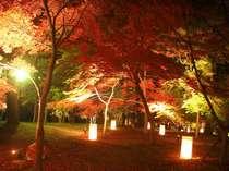 第2弾◆オータム感謝祭◆11月限定!1泊2食付9800円~■これだけオトクな月はない★紅葉見るなら今が旬~!