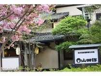 玄関前に咲く八重桜