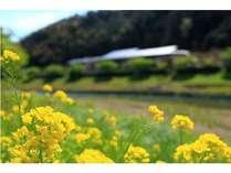 当館真裏の河川敷は新緑を眺めながらゆっくりお散歩するのがおすすめ