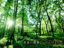 ~お盆限定~【美味special】九重の山々に囲まれ、マイナスイオンたっぷり、避暑&森林浴はいかが?