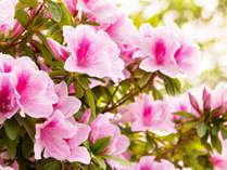 ~初夏限定~■選べる夕食■ ≪天然記念ミヤマキリシマの苗プレゼント≫ 樹の香り、そよぐ枝葉の安らぎと。