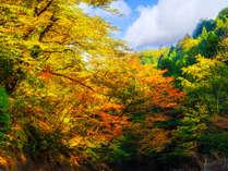 ■紅葉■ 山側客室からお愉しみいただける紅葉は、「10月中旬より11月上旬頃」までが目安です♪