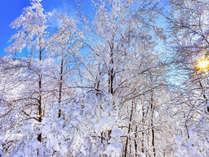 九重の地に、冬がやってきました。雪見露天が楽しみですが、お気をつけてお越しくださいませ