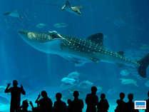 大人気「沖縄美ら海水族館」までホテルから徒歩10分♪