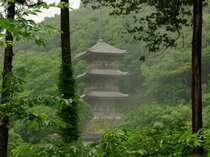 霧雨にかすむ新緑の三重塔