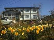 春、みきのや  スイセン