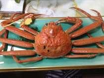 ◆1万円台GIタグ付き「越前ガニ」食べたいプラン◆茹でガニ・焼きガニ・カニ天ぷら食べてみたいプラン