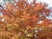 紅葉と読書の秋。映山湖で遊ぶファミリープラン