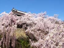 上田城址/春になると様々な種類の桜をみることができます