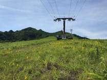 初夏 オオキンケイギクの咲く岩原スキー場