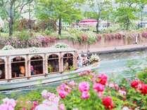 130万本のバラ祭 青い空とバラの美しさをお楽しみください。