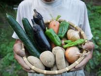 【自家製夏野菜】無農薬野菜を自慢の但馬牛と一緒に召し上がれ♪