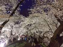 ≪霞城公園≫の夜桜心が癒されます。