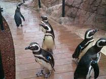 「水族博物館うみがたり」入館チケット付♪海の仲間に会いに行こう!<朝食バイキング付>