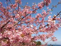 早い春の訪れを感じさせてくれる小積の河津桜☆ 見頃は2月下旬~3月上旬。ホテルから車で約5分です♪