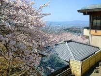【桜に囲まれた当館】若草山の美しい桜に囲まれた当館は、春もまた人気のシーズンのひとつです。