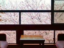 【満開の桜をお部屋から…】お部屋にいながらお花見が楽しめ、日本の春の美しさをご実感いただけます。